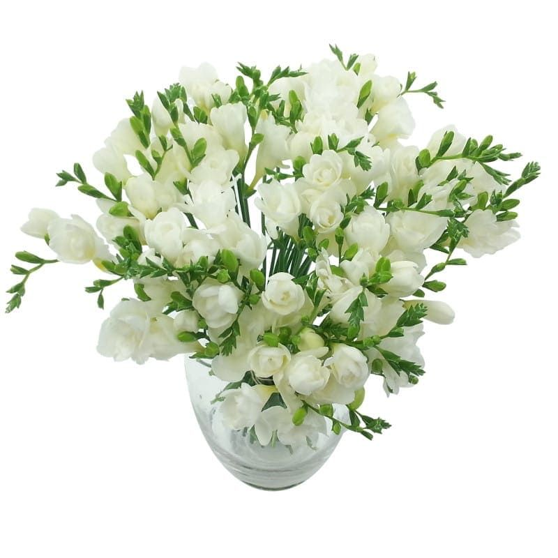 10 Blessings Of Flowers To Deliver And The Way You Could Make Entire Use Of It Five Quick Suggesti Freesia Bouquet Freesia Flowers Beautiful Bouquet Of Flowers