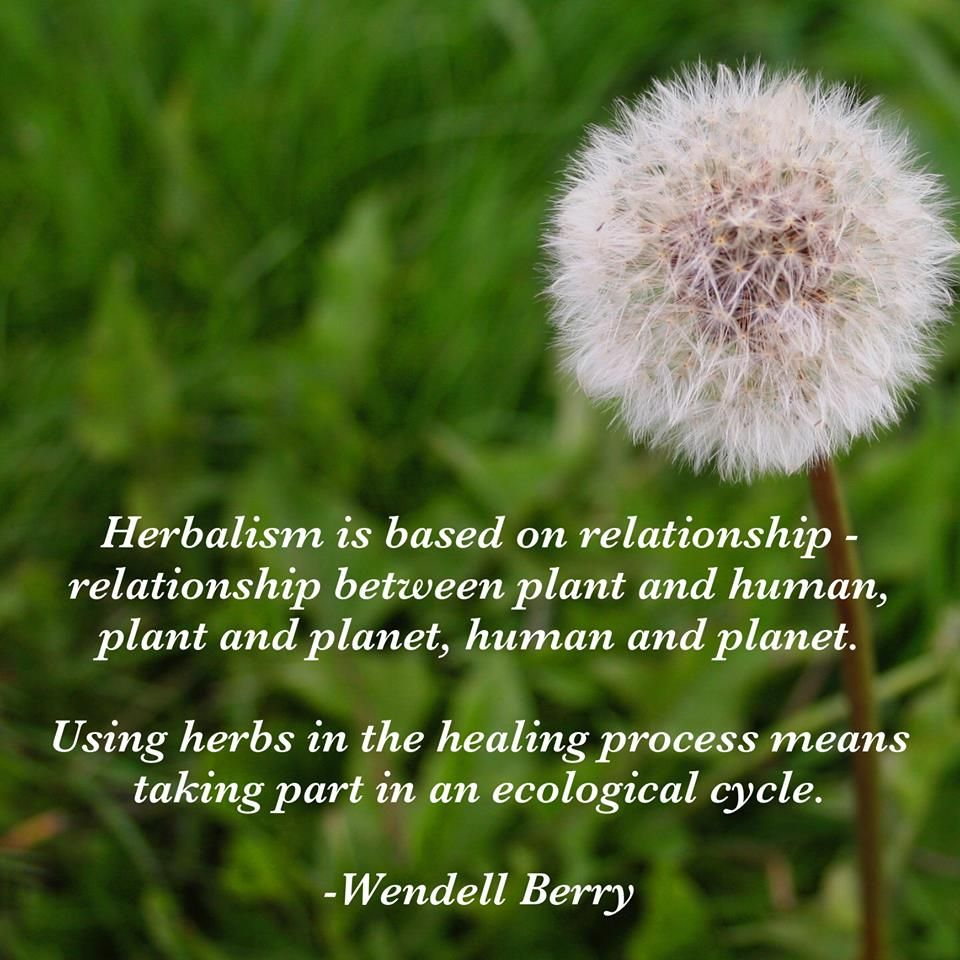 Pin by Traditional Medicinals Tea on Herbal Wisdom