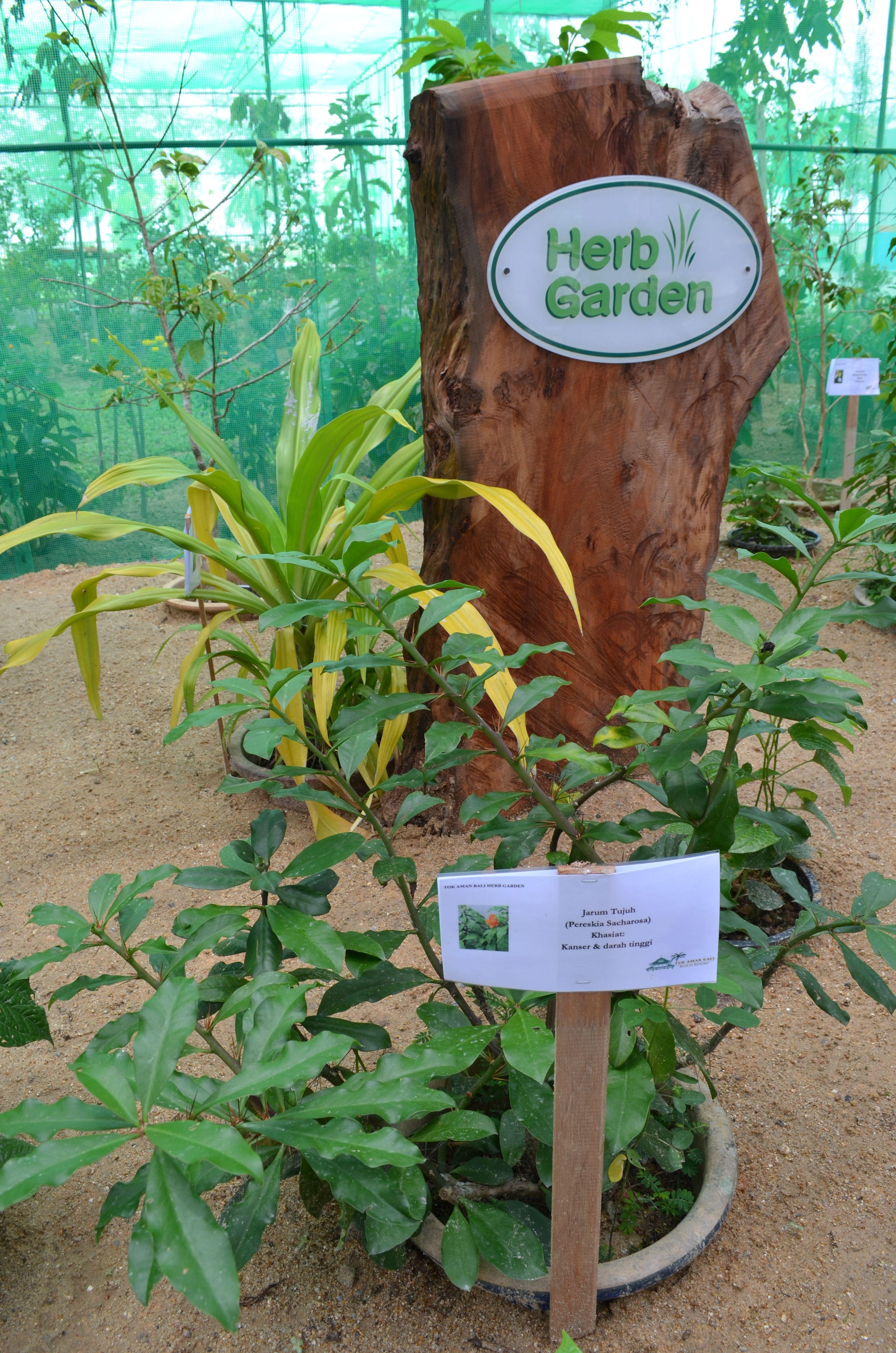 Tok Aman Bali Beach Resort - Herbs Garden | Follow us: https://www ...