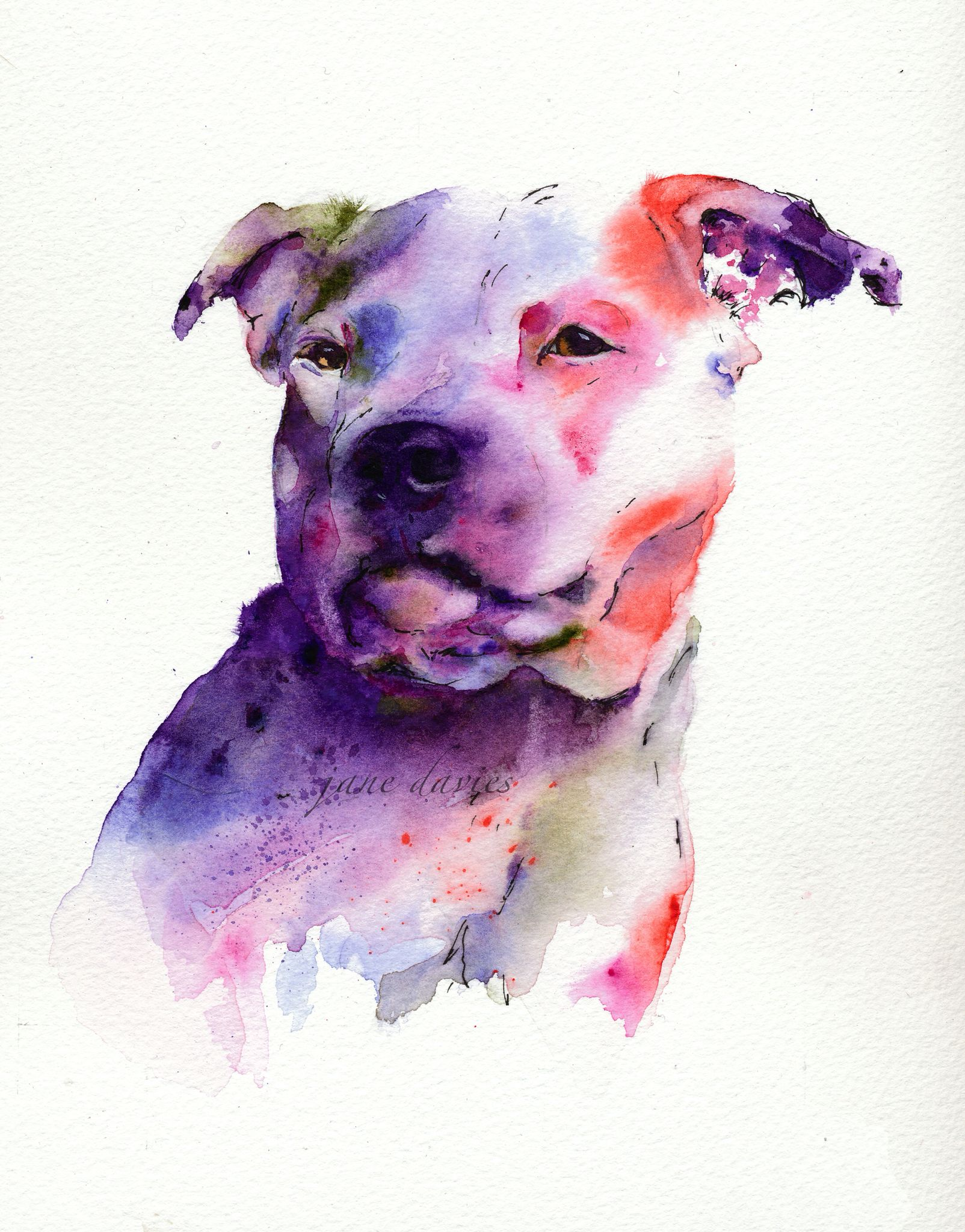 bull terrier artist staffordshire bull terrier in watercolour painted by 6936