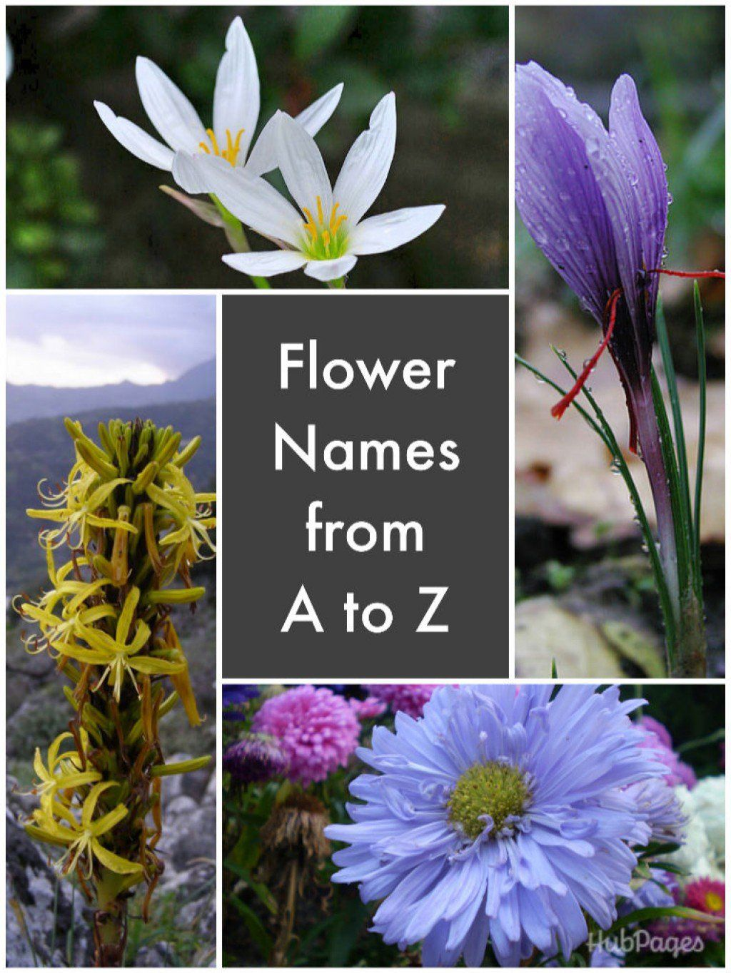 A List of Flower Names From A to Z Flowers name list