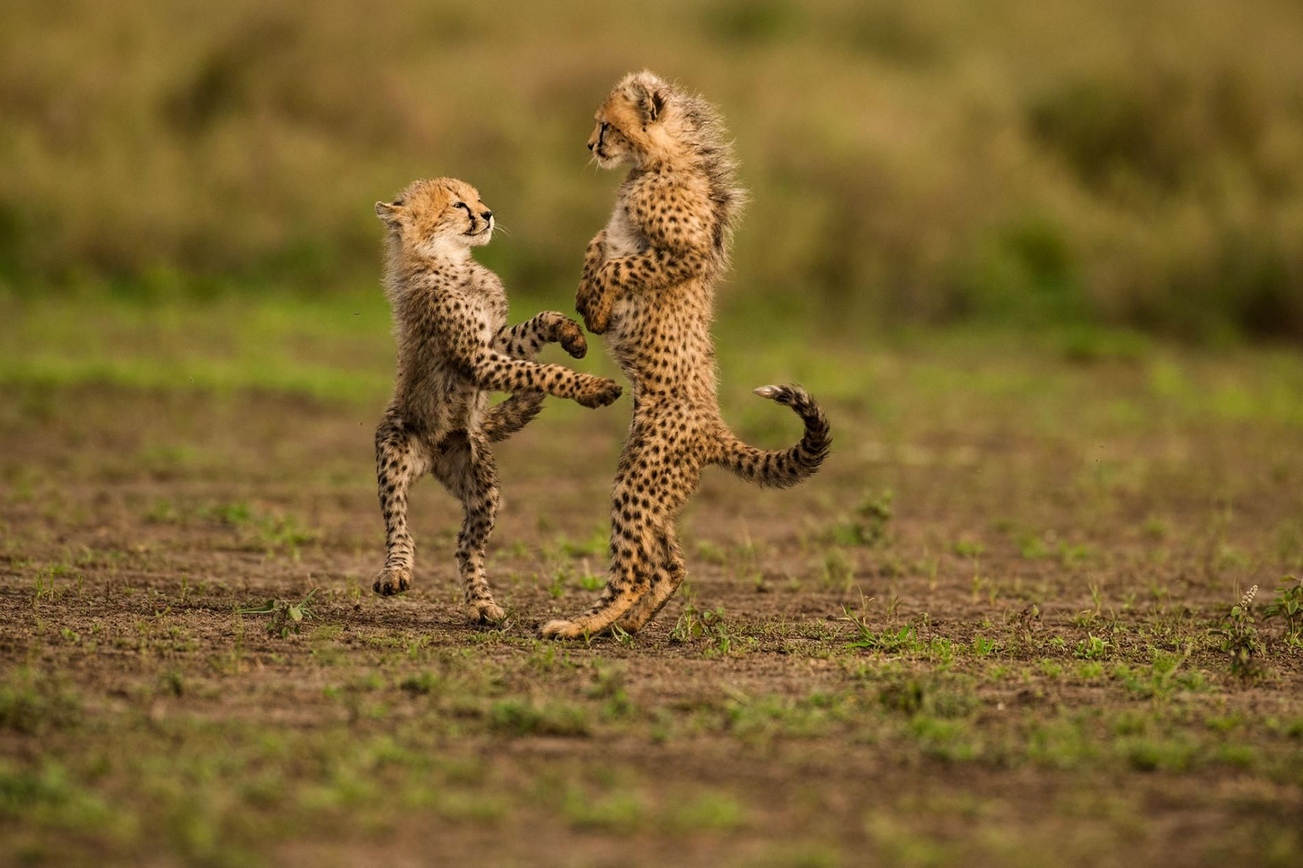 Striking Images From One Of The World S Best Wildlife Photographers National Geographic Animals Animals Animals Wild