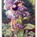 Heliotrope Flower Fairy