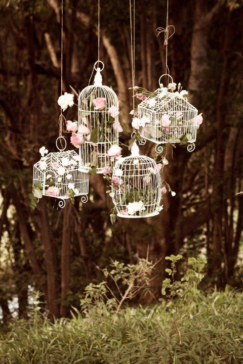 bird cages linduras Pinterest Bird cages, Bird and Birdcage decor