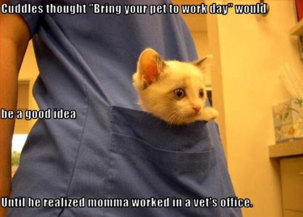 Funny Meme June 2015 : Poor cuddles th june cuddling cat and animal