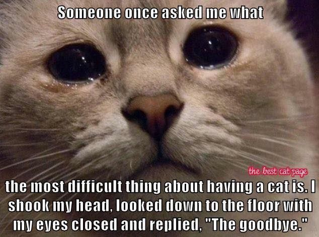This is still HARD - I miss my kitties so MUCH ...