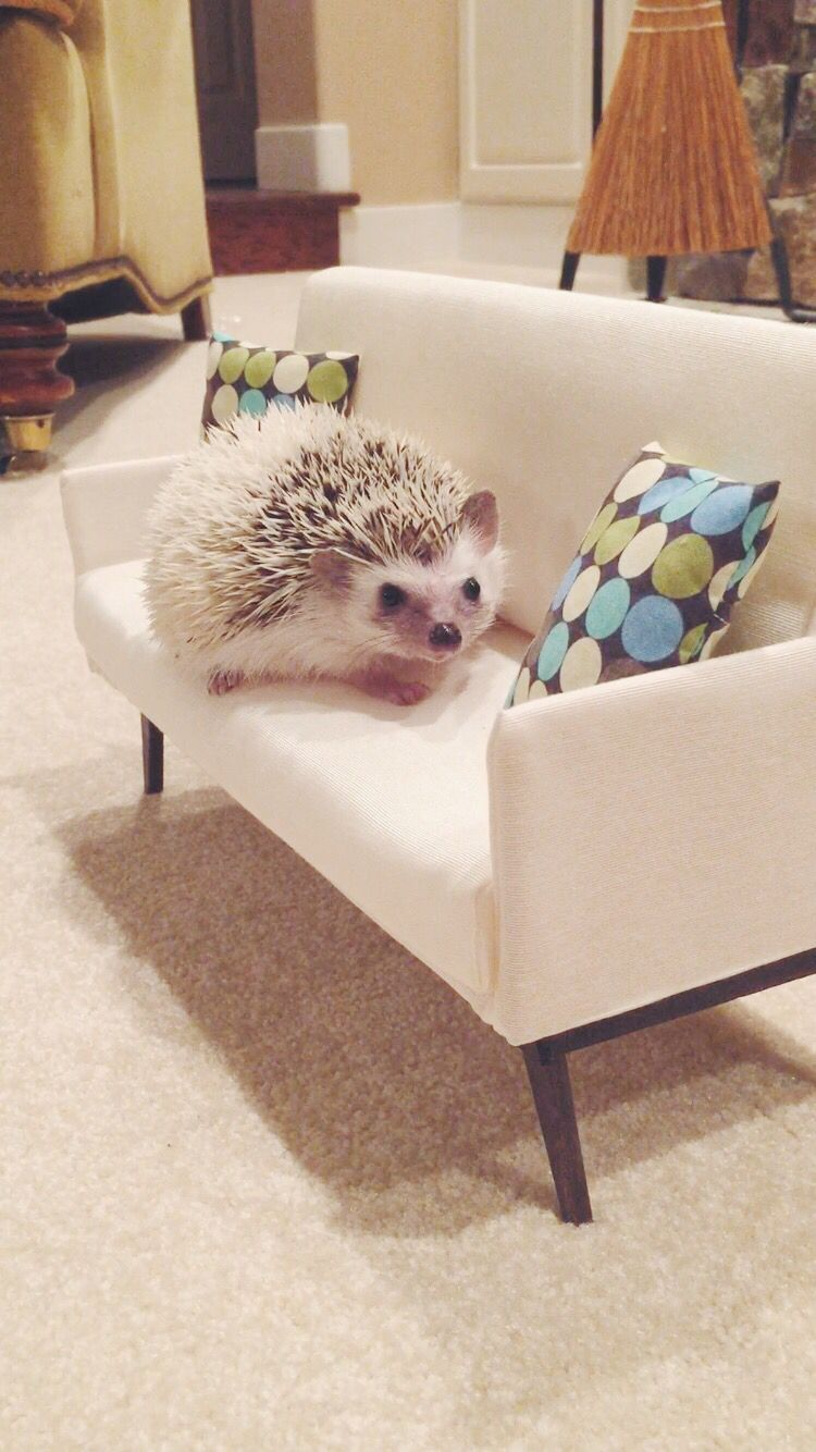 Winston on his sofa