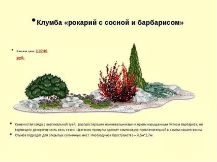 схема клумбы с хвойными барбарисом спиреей: 26 тис. зображень знайдено в Яндекс.Зображеннях