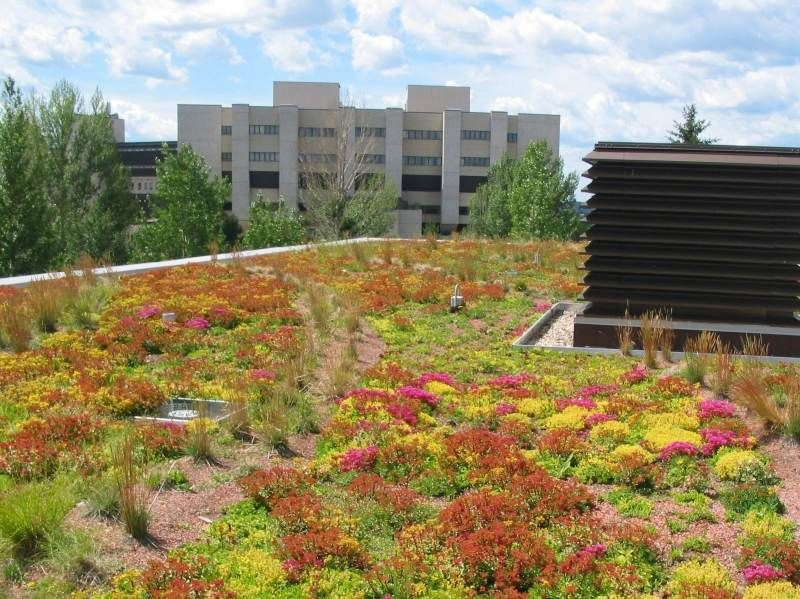dach mit verschiedenen bodendeckern angepflanzt   dachgarten, Garten und erstellen