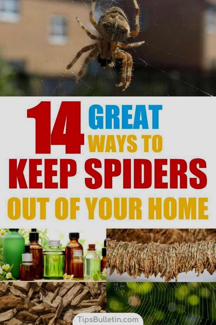 14fc931a66409b25ebd4a56f186ce61e - How To Get Rid Of Spiders From Your Car