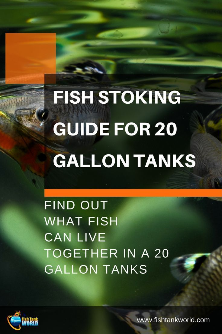 Setup Ideas For Your 20 Gallon Fish Tank | Saltwater ...
