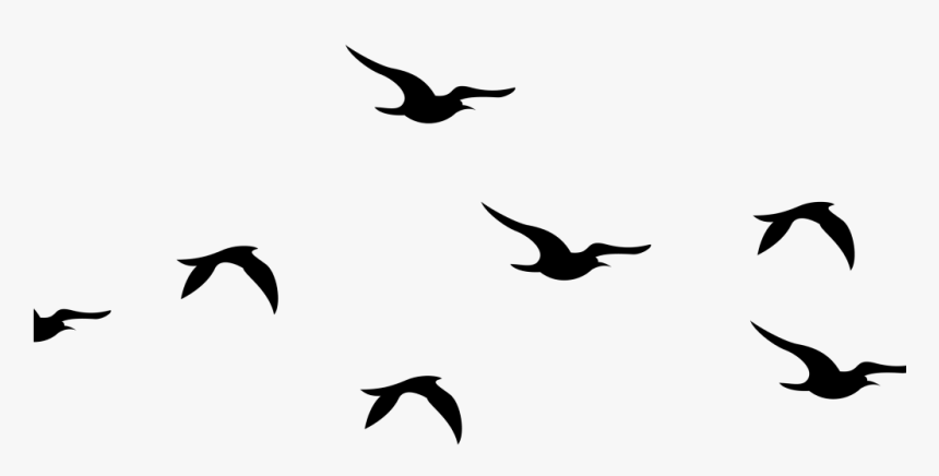 Flying Birds Silhouette Png Clipart Png Download Flying Silhouette Bird Clipart Transparent Png Is Fre Flying Bird Silhouette Bird Silhouette Birds Flying