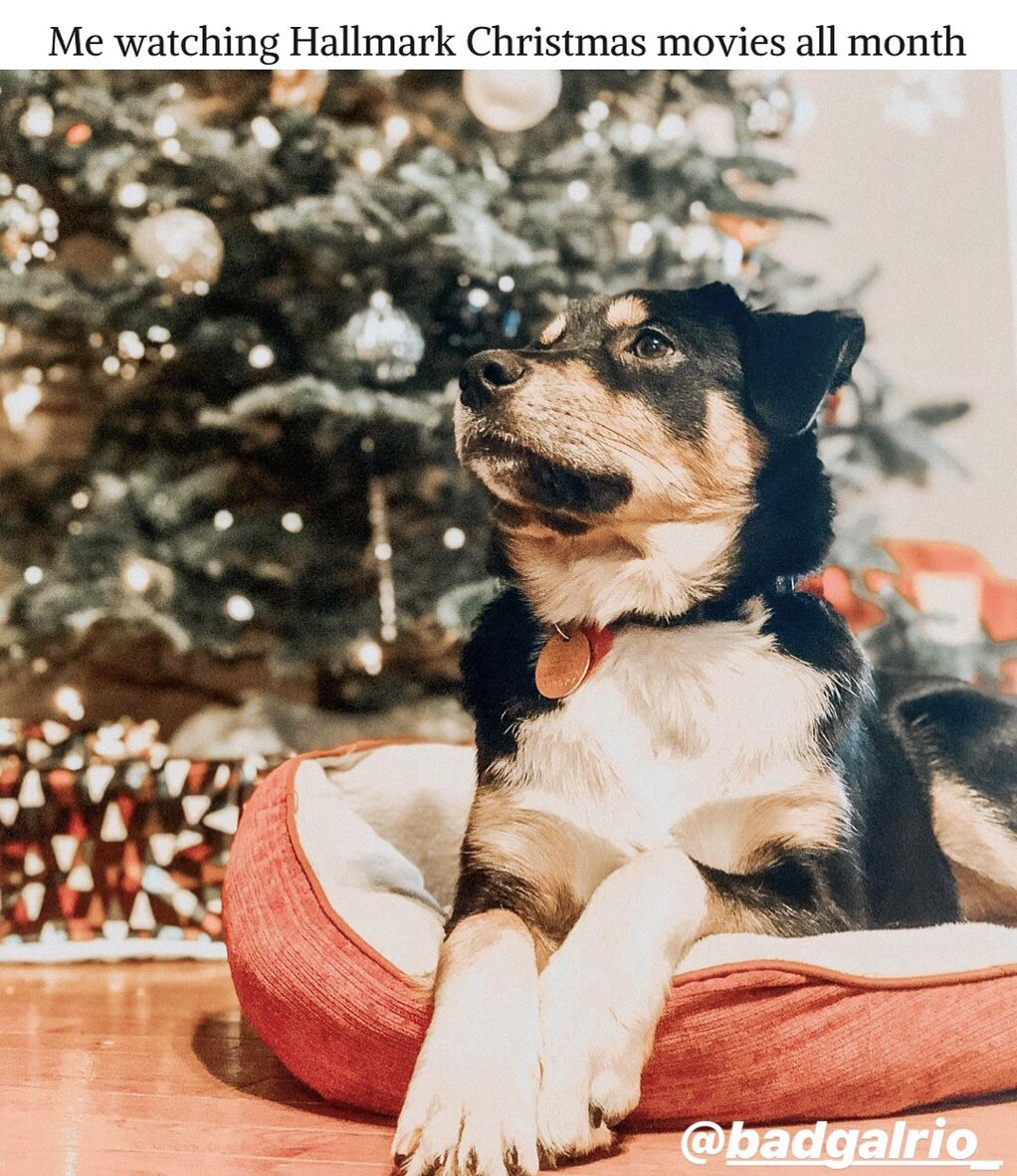 Hallmark Christmas Movies A Cute Puppy Yes Please Puppies