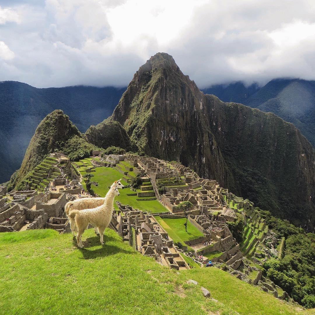 Llamas Overlooking Machu Picchu Peru Photo Dave Man Vs Globe Manvsglobe Machupicchu Peru Llamas Trave Macchu Picchu Machu Pichu Machu Picchu Peru
