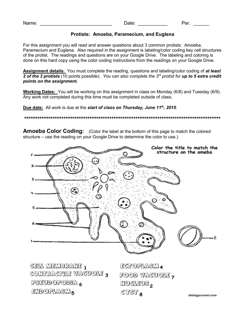 Protist Coloring Sheet Key Protists Coloring Sheets Color
