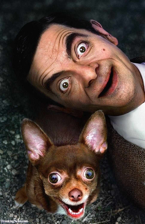 Mr Bean Gusandkenzo Cute Animals Funny Animals Chihuahua Love