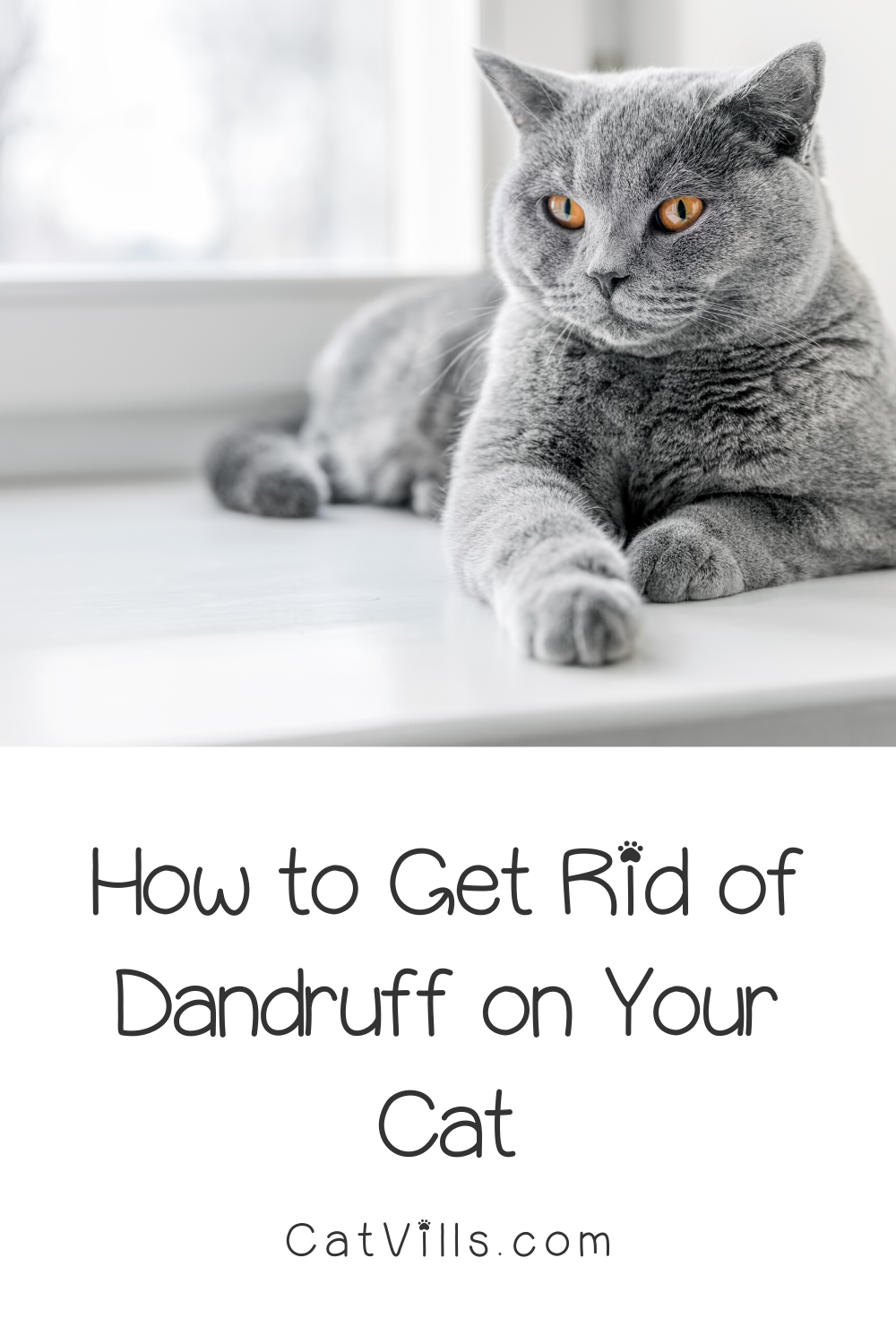 6 Easy Ways To Get Rid Of Dandruff On Your Cat Catvills In 2020 Cats Cat Care Cat Dandruff