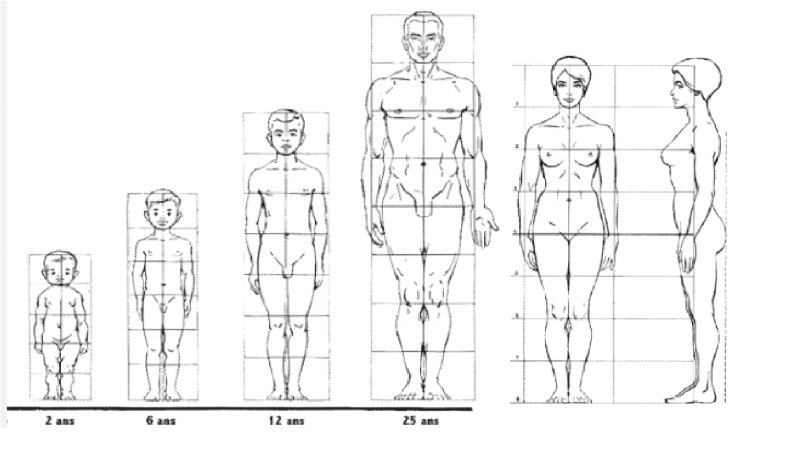 """Résultat de recherche d'images pour """"proportions corps humain"""""""