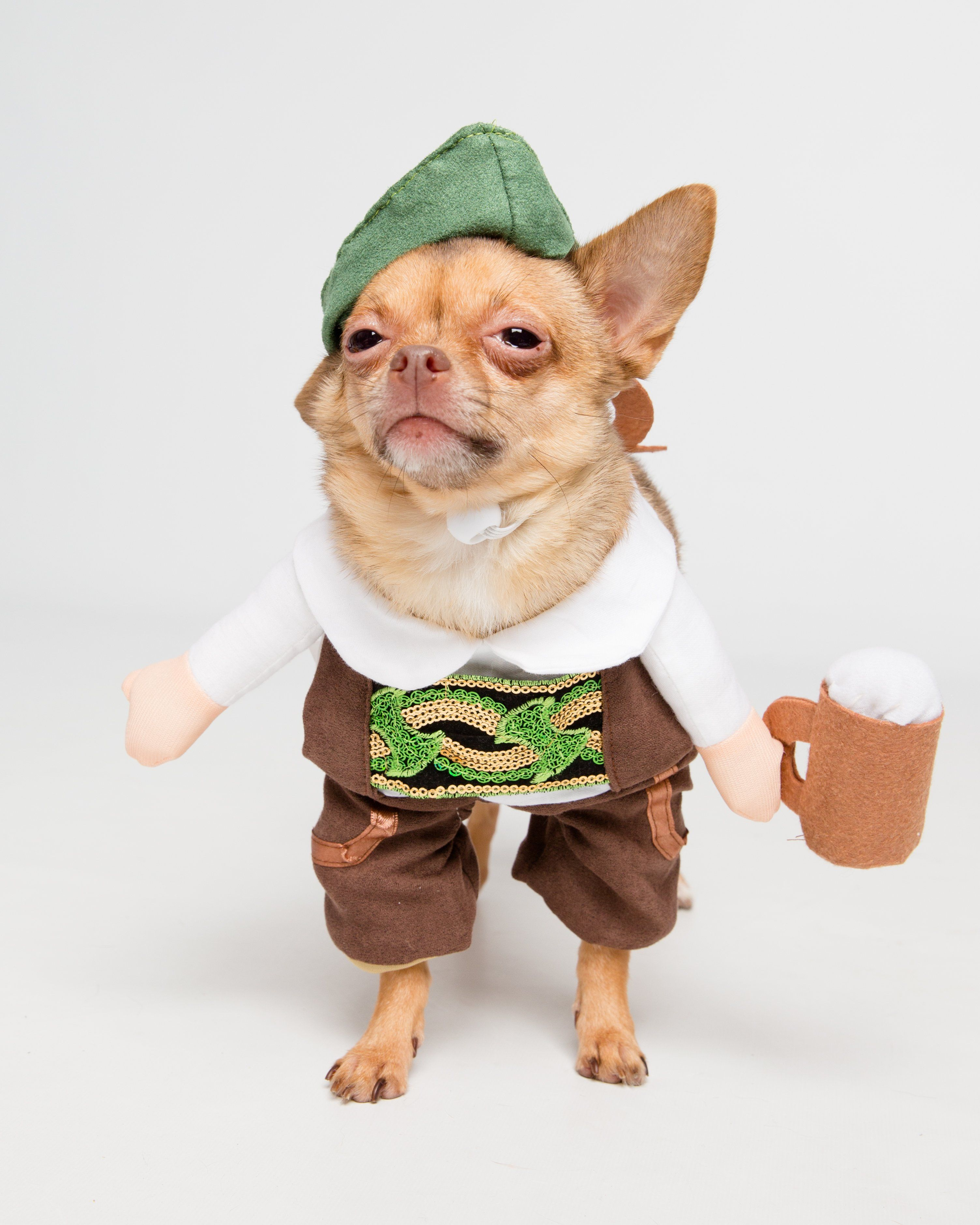 German Oktoberfest Dog Costume Pet Costumes Dog Halloween Pets