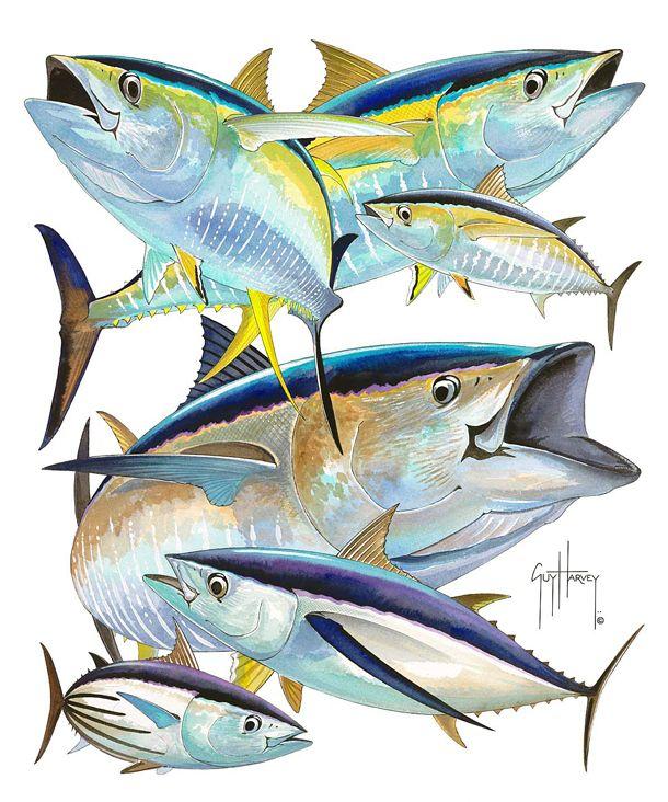 Yellowfin Tuna Aquatic Inspirations Pinterest Yellowfin Tuna