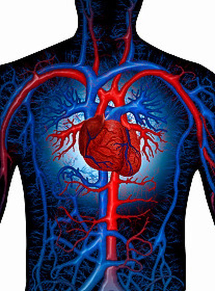 Tipos de vasos sanguíneos: venas y arterias: Arterias | Disfrases en ...
