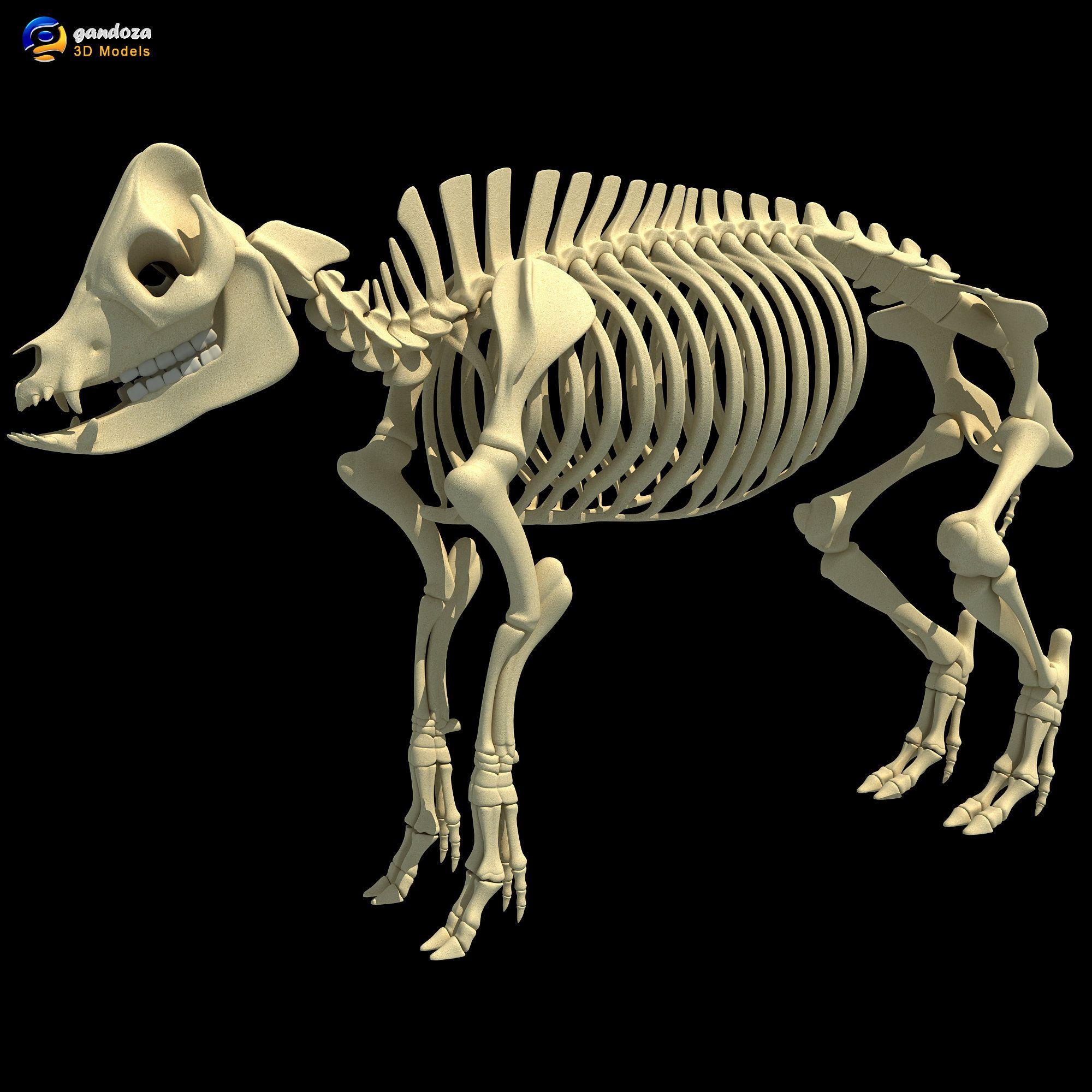 Pig Skeleton - 3D Animals by Gandoza | Animal Skeletons | Pinterest ...