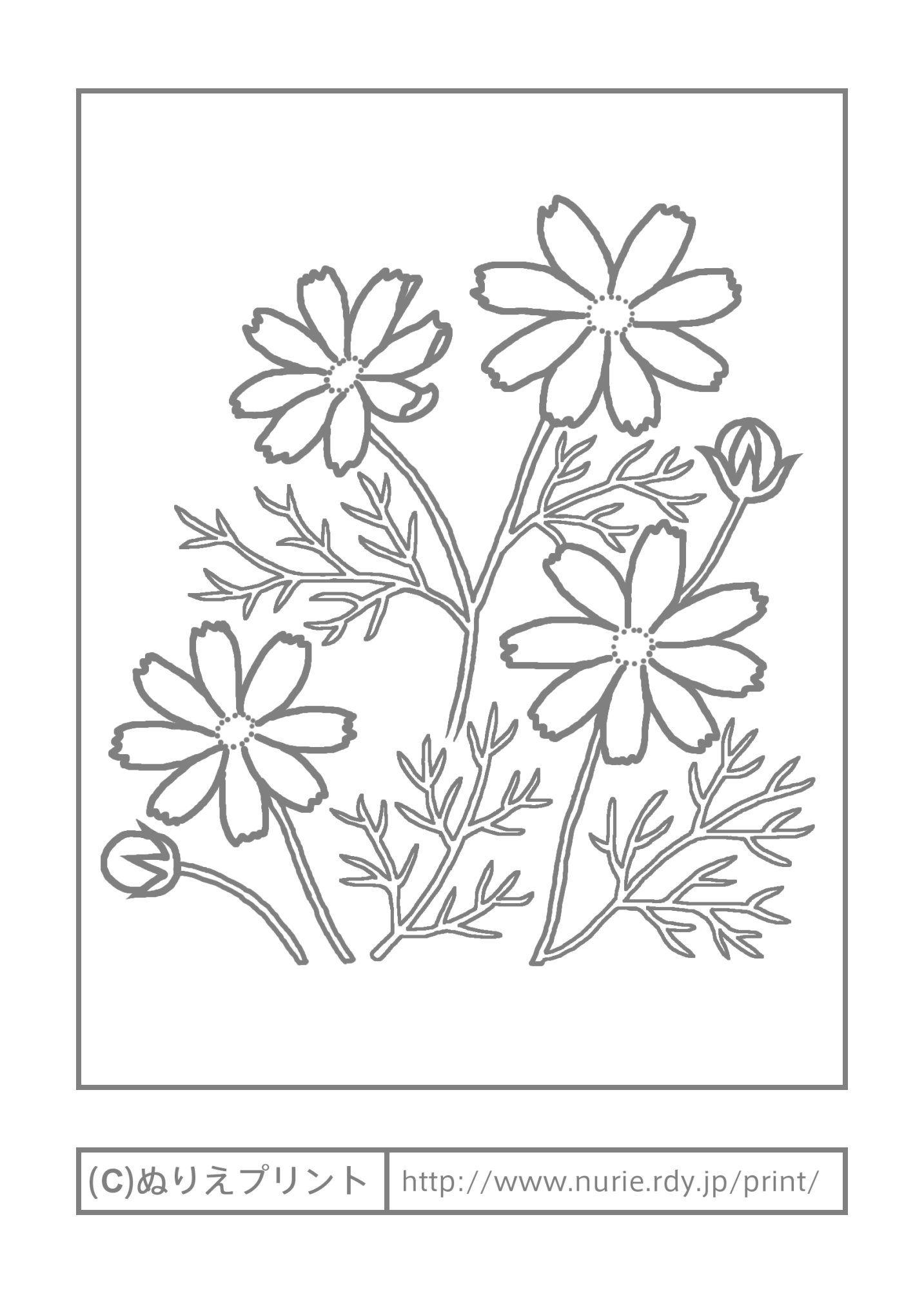 コスモス 主線 グレー 秋の花 無料塗り絵イラスト ぬりえプリント 塗り絵 無料 塗り絵