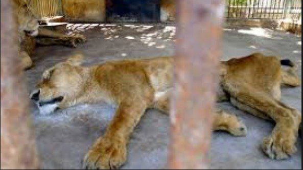 A disgrace for humanity!!! Save animals in Egyptian Zoos !!!!
