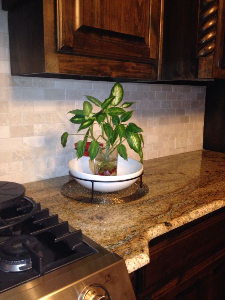 A Plant In Water On My Kitchen Counter Top Simple Decoration