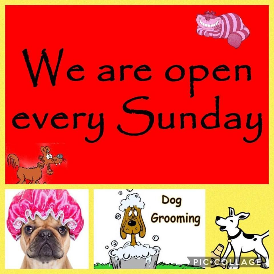Stop By The Shop And Join Us For Our Very First Shampooch Sunday Freeshampoo Upgrade With Any Sunday Spa Service Spa Services Dog Grooming Movie Posters