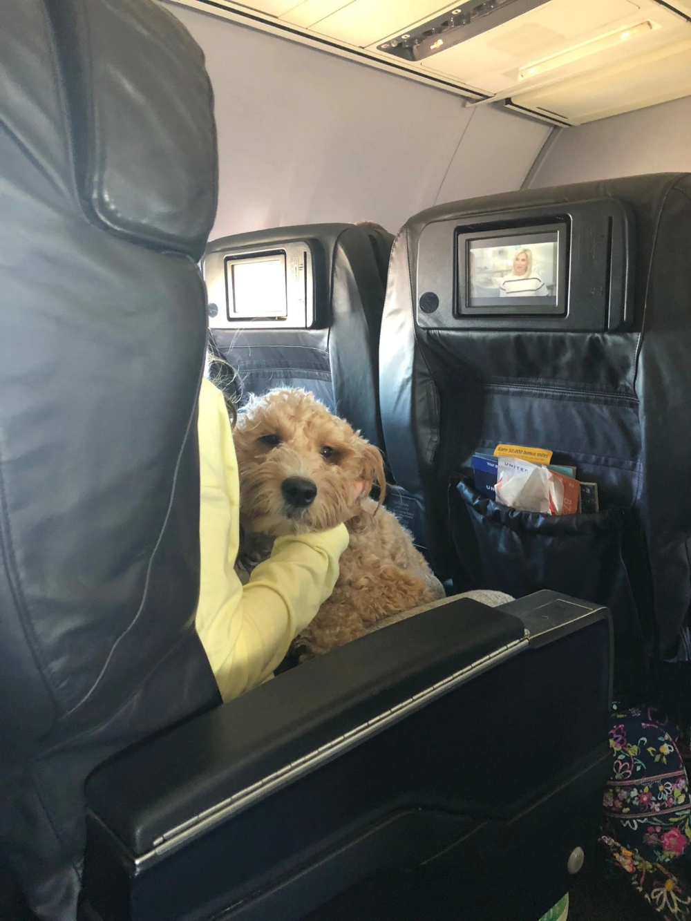 If emotional support animals are banned from planes, some
