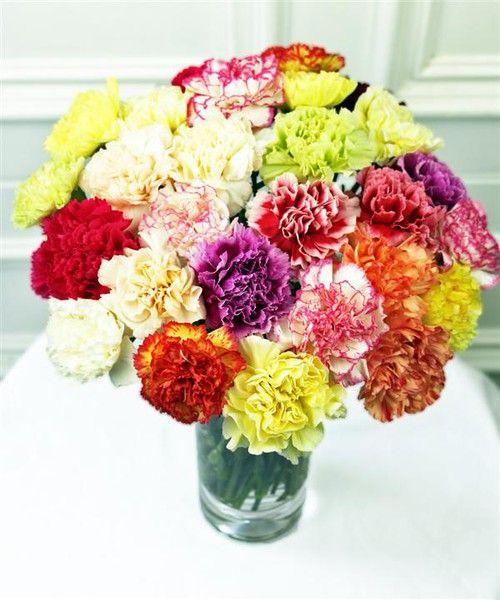 Carnations Denise93 Carnations Carnation Flower Pretty Flowers