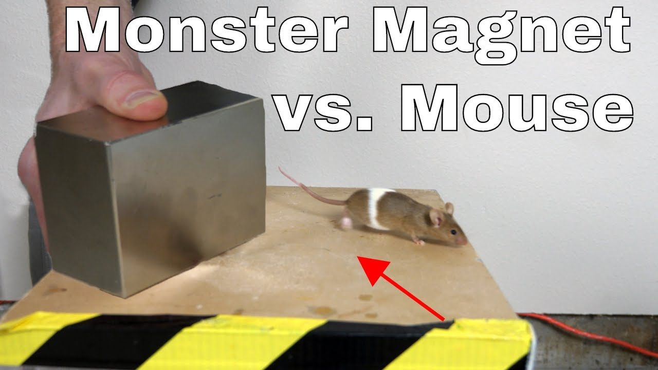 What Does a Giant Monster Neodymium do to a Mouse