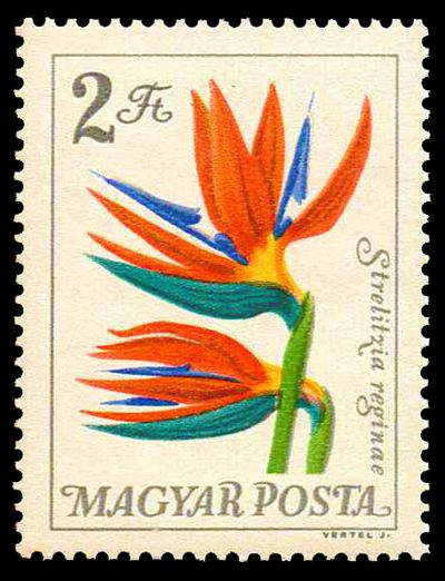 Martina flower from hungary - 1 7