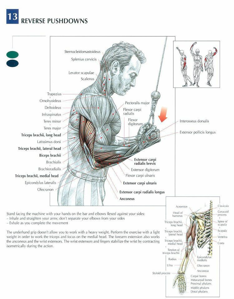 Triceps #workout #gymrat | Fawk Fibro!!!! | Pinterest | Triceps ...