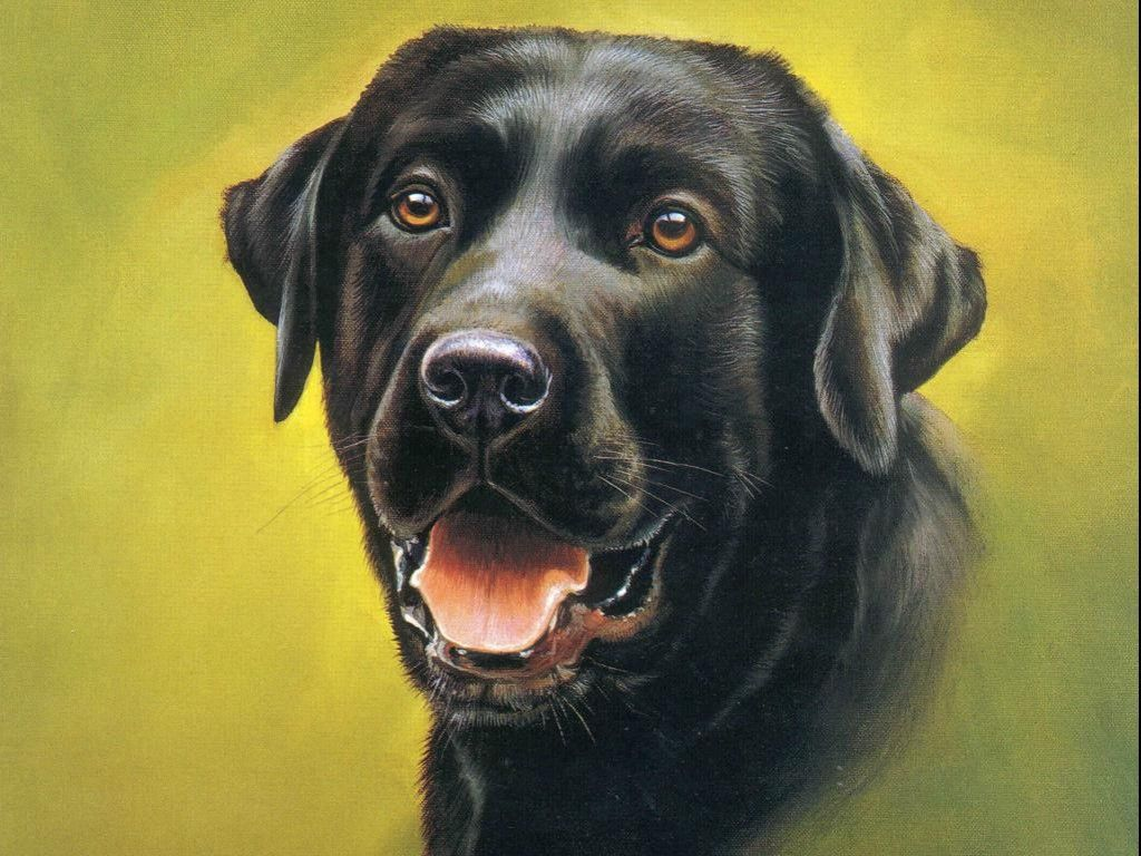 Black Dog Wallpaper Hd Image Cute Black Dog Hd Wallpapers Animal Paintings Oversized Canvas Wall Art Cross Paintings
