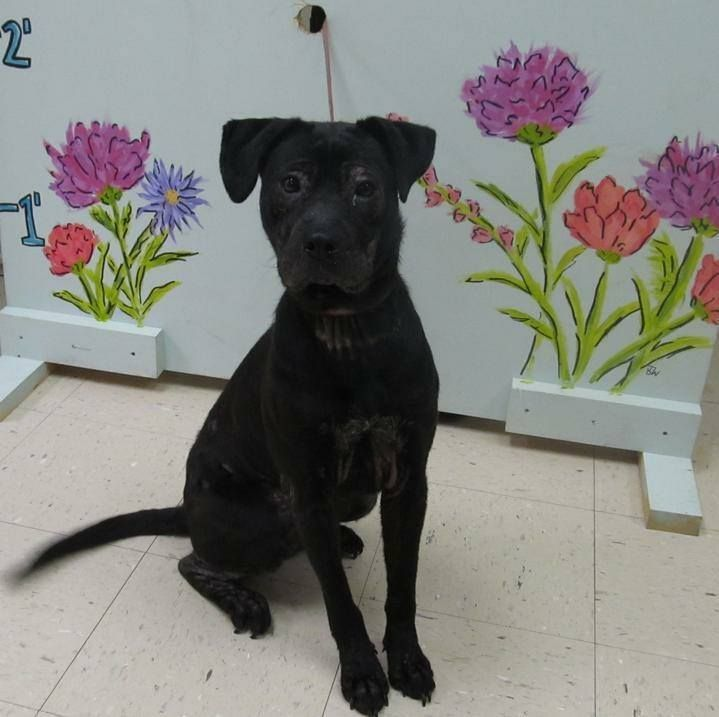 In Sanford Nc Animal Shelter Clik On Facebook Link Or Call The