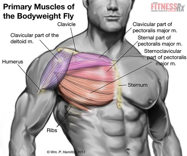 how to get center chest muscles