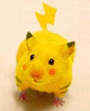 Picamouse Lol Pikahamster Pet Halloween Costumes Funny