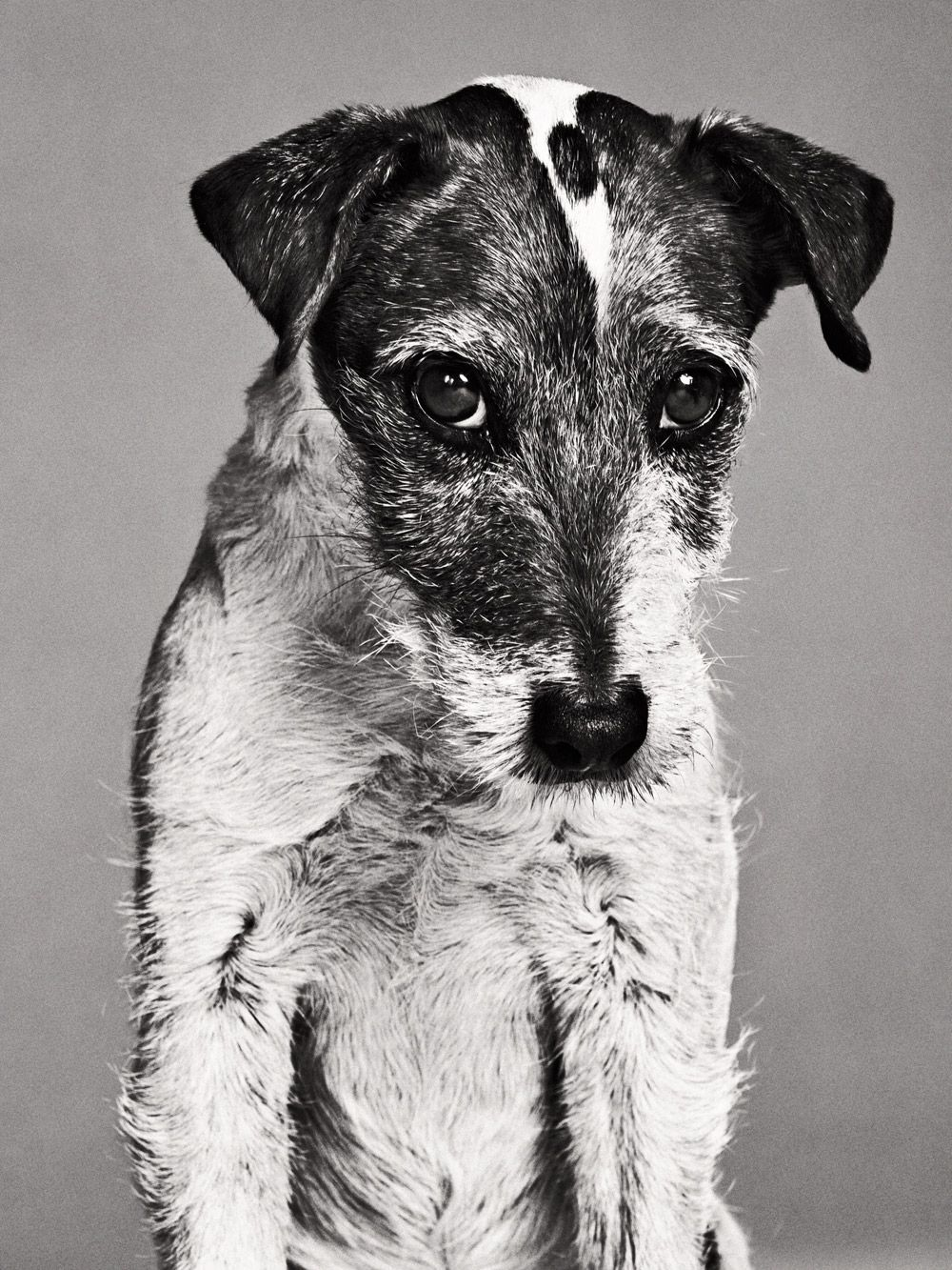 Uggie - a great [dog] performer