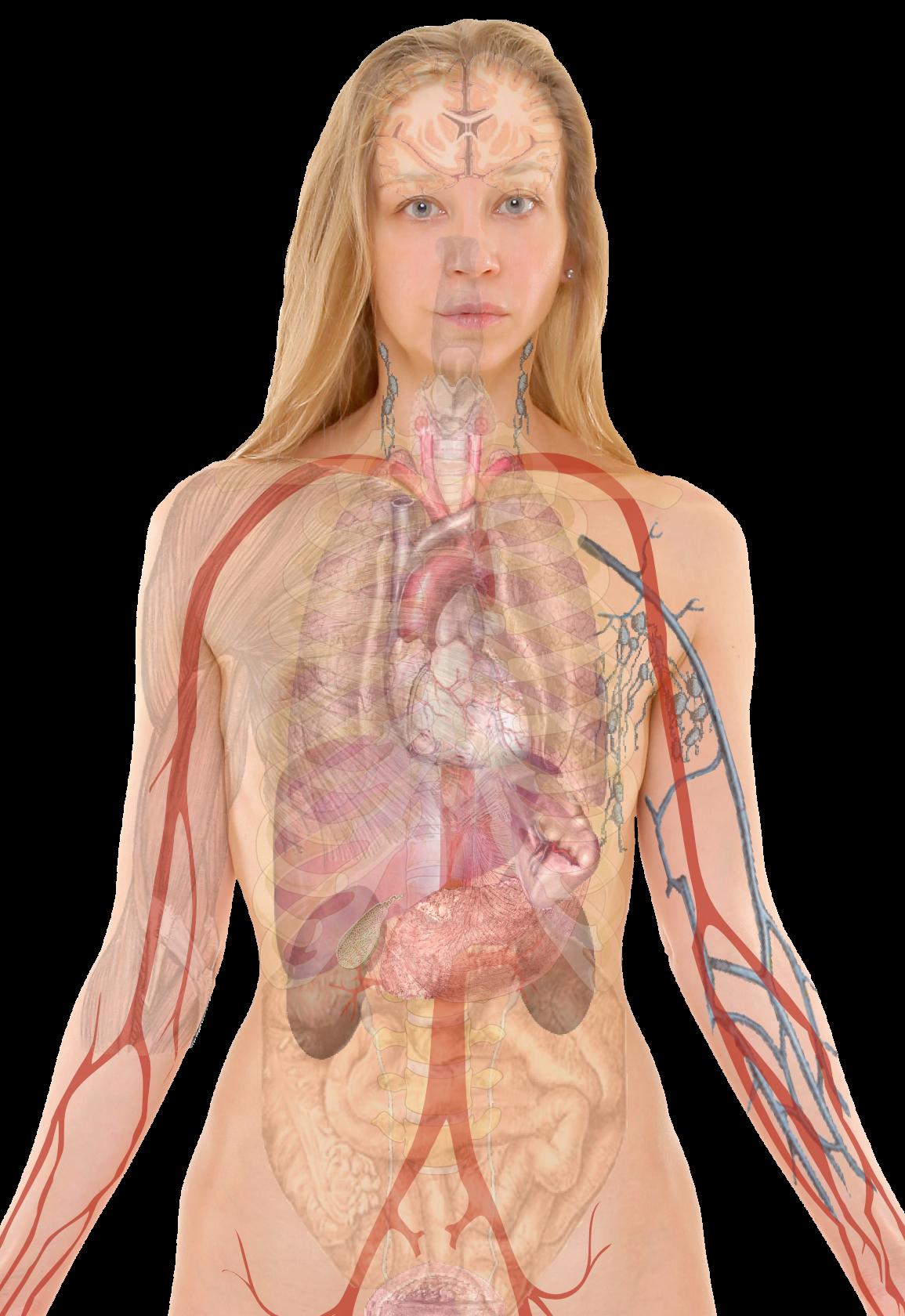 anatomy female genital | Female Anatomy | Pinterest | Anatomy