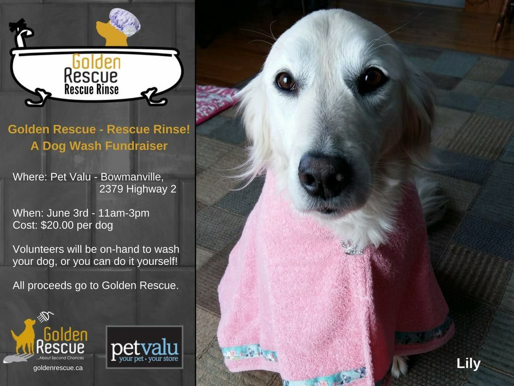 Join us for our rescue rinse dog wash fundraiser golden rescue dog solutioingenieria Gallery