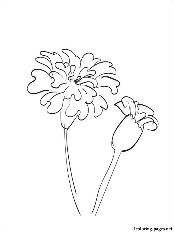 Marigold Coloring And Printable Page Coloring Pages Flower