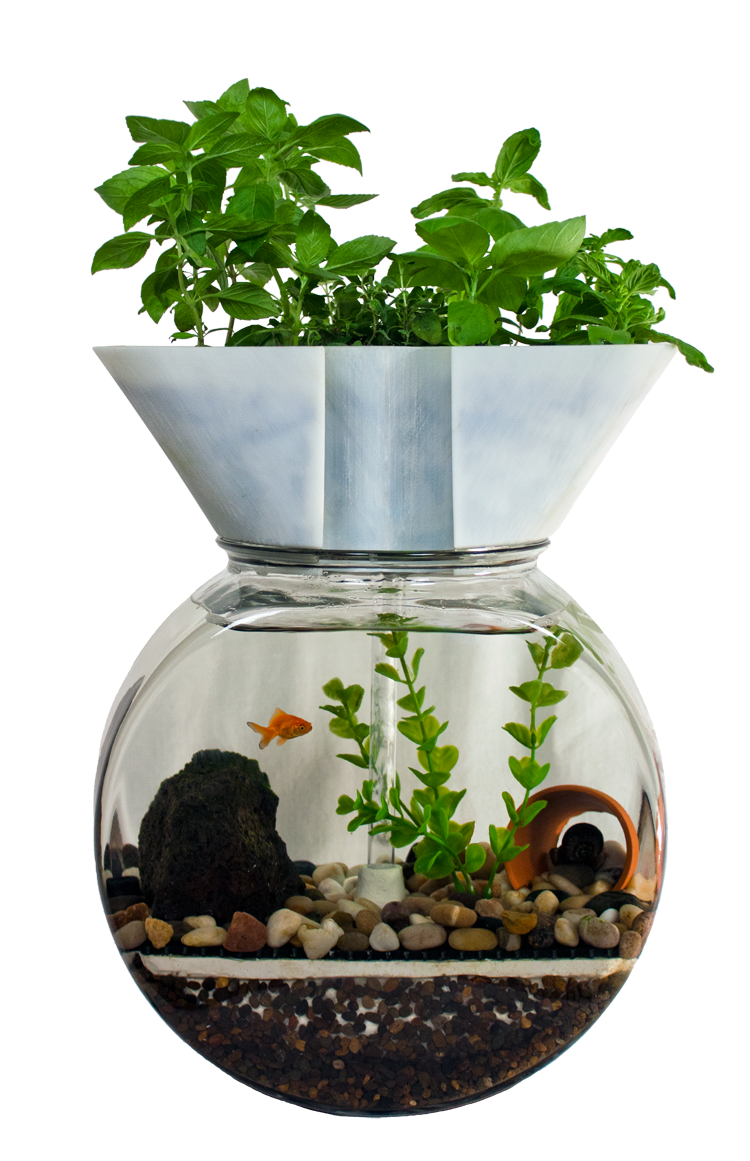 comment planter en aquaponie