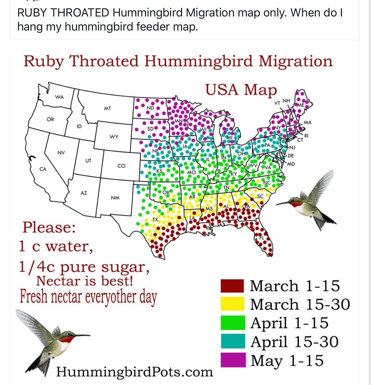 Pin by Debbie Kluth on outdoors Humming bird feeders
