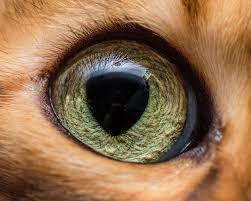 「美しい瞳」の画像検索結果