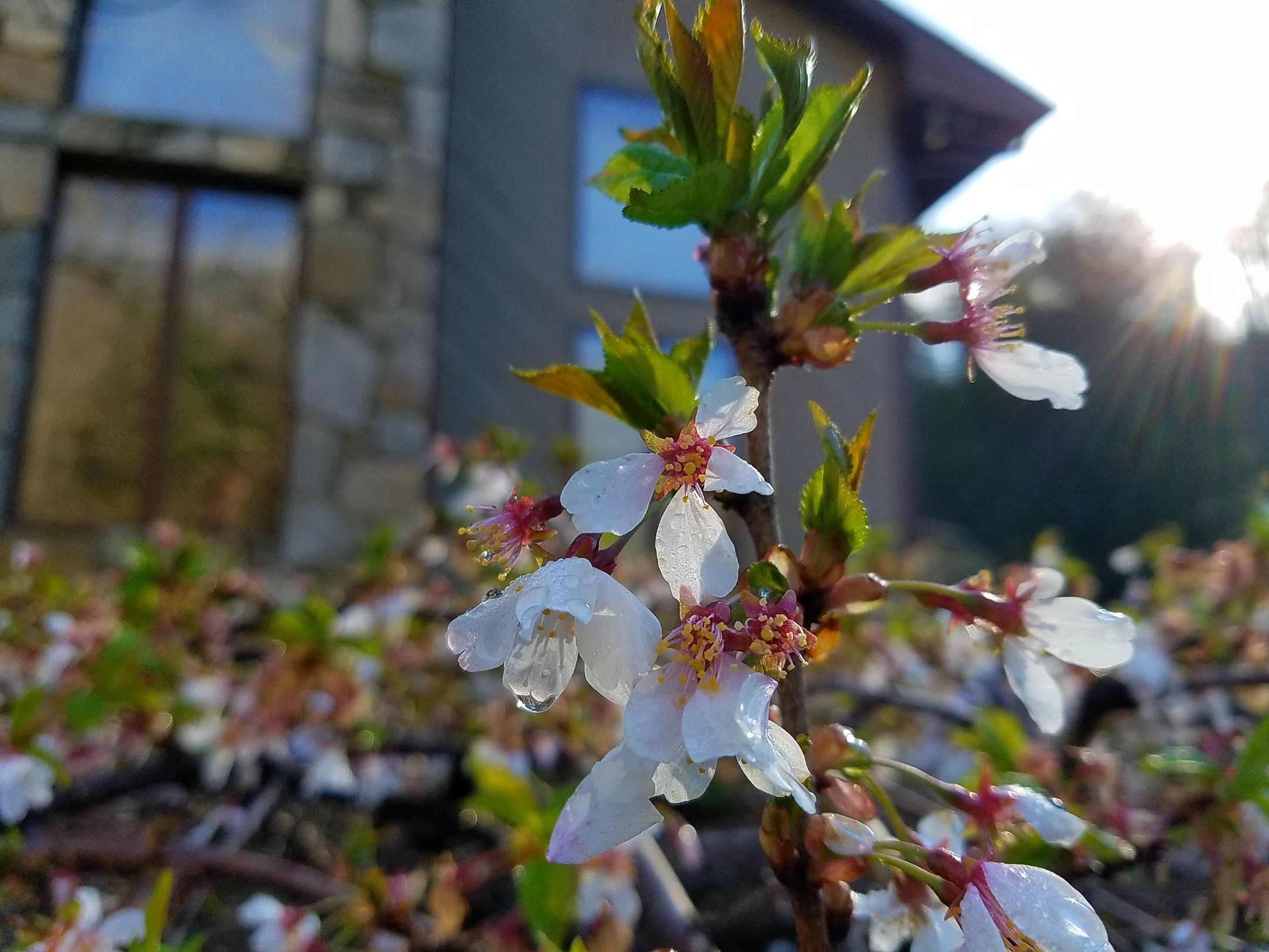 Happy Spring From The Inn On Mill Creek In Western North Carolina