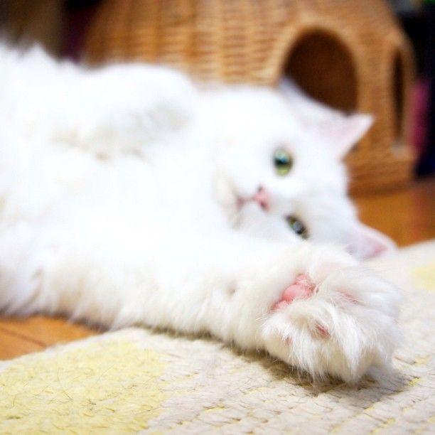 Photo by nemuru_cat