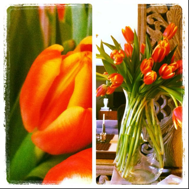 Love the colors of these Trader Joes tulips that I picked up today for my home