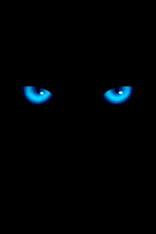 Black Cat Eyes Wallpaper Cat Wallpaper Dark Wallpaper Cool cat eyes wallpaper